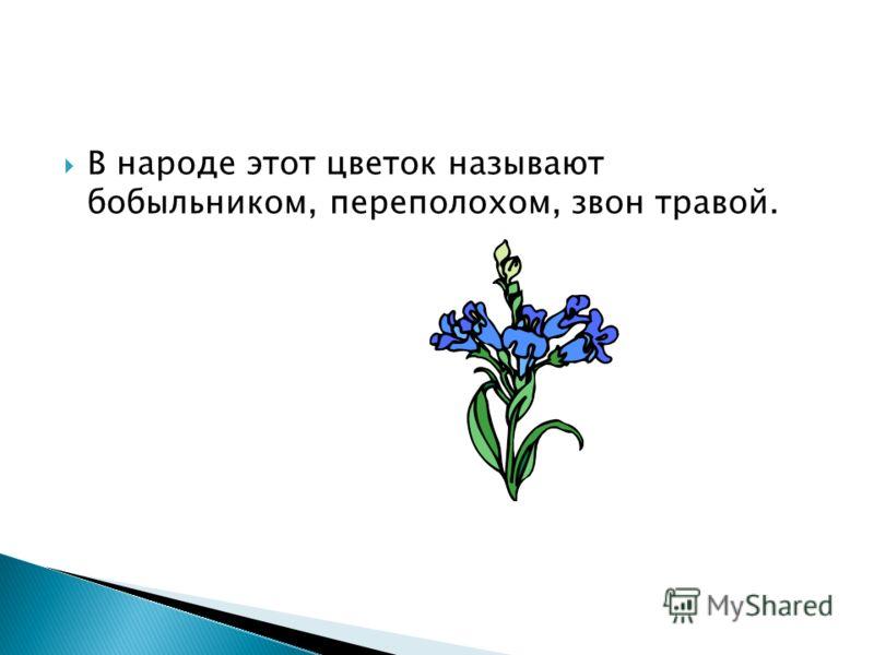 В народе этот цветок называют бобыльником, переполохом, звон травой.