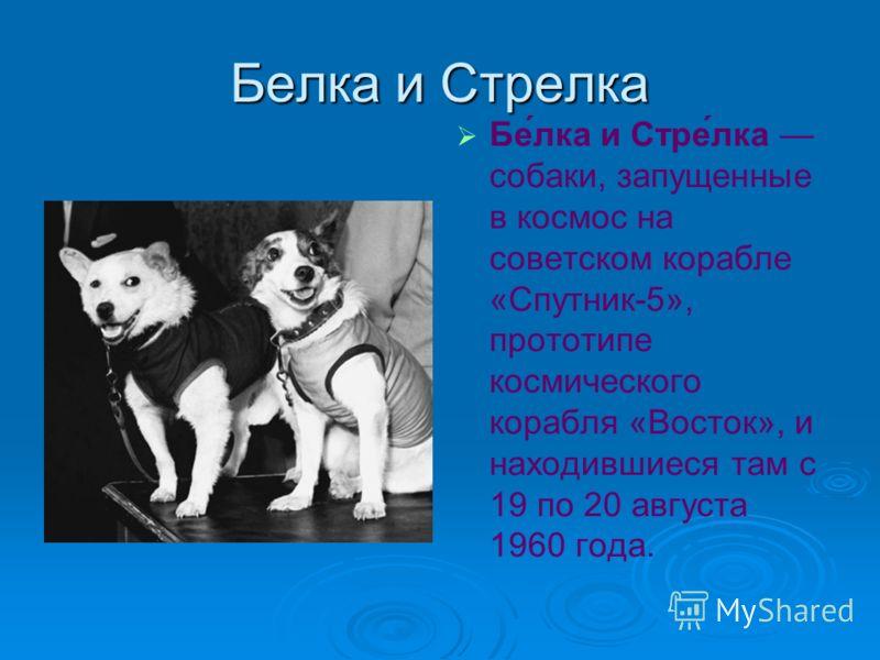 Белка и Стрелка Бе́лка и Стре́лка собаки, запущенные в космос на советском корабле «Спутник-5», прототипе космического корабля «Восток», и находившиеся там с 19 по 20 августа 1960 года.