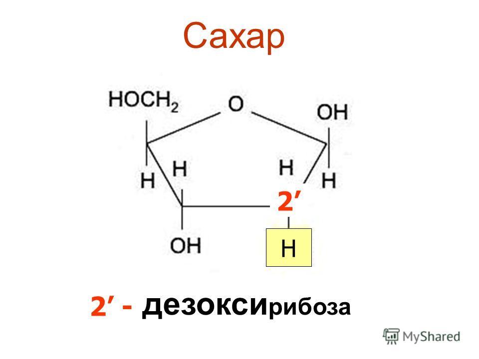 Сахар дезоксириоза 2 H 2 -