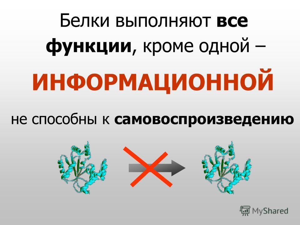 Белки выполняют все функции, кроме одной – ИНФОРМАЦИОННОЙ не способны к самовоспроизведению