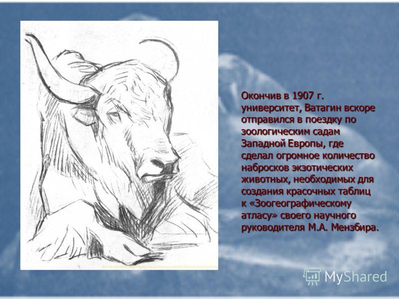 Окончив в 1907 г. университет, Ватагин вскоре отправился в поездку по зоологическим садам Западной Европы, где сделал огромное количество набросков экзотических животных, необходимых для создания красочных таблиц к «Зоогеографическому атласу» своего