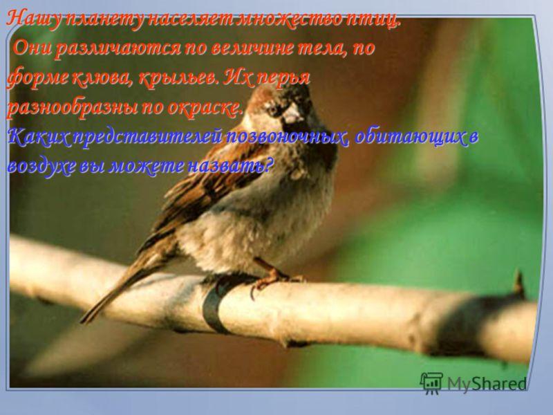Оперение, как и шерстяные вещи, сохраняет тепло организма. Поэтому температура тела птицы всегда высокая и иногда достигает 45°С. Значит, перья у птицы – важнейшее приспособление, которое служит опорой во время полета и средством для сохранения тепла