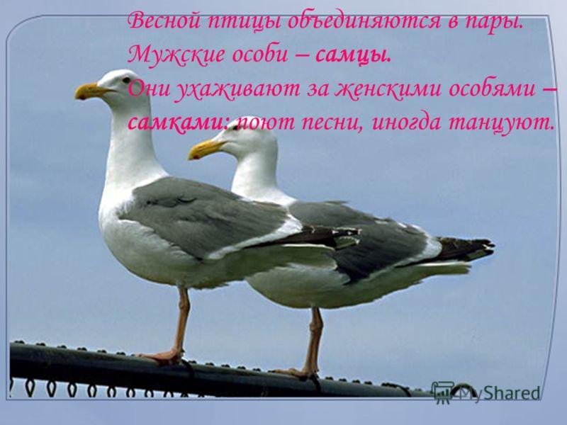 Нашу планету населяет множество птиц. Они различаются по величине тела, по Они различаются по величине тела, по форме клюва, крыльев. Их перья разнообразны по окраске. Каких представителей позвоночных, обитающих в воздухе вы можете назвать?