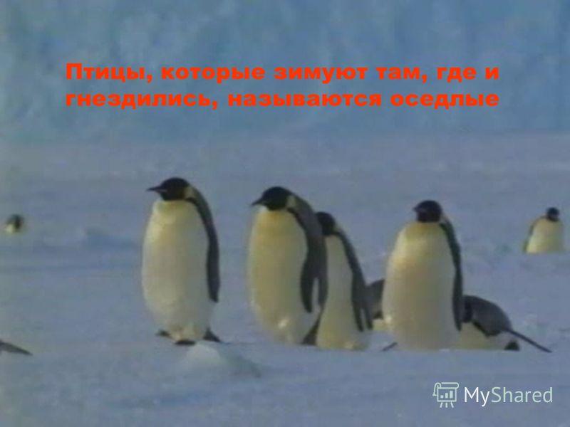 Птицы, улетающие на зиму в теплые края, называются ПЕРЕЛЕТНЫМИ. ПЕРЕЛЕТНЫМИ.