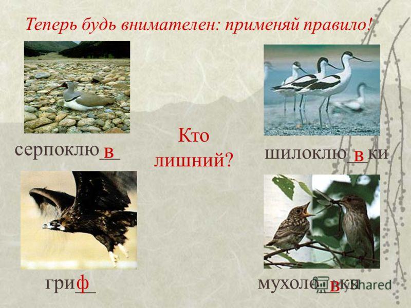 Теперь будь внимателен: применяй правило! серпоклю__ шилоклю__ки гри__мухоло__ки Кто лишний? в ф в в