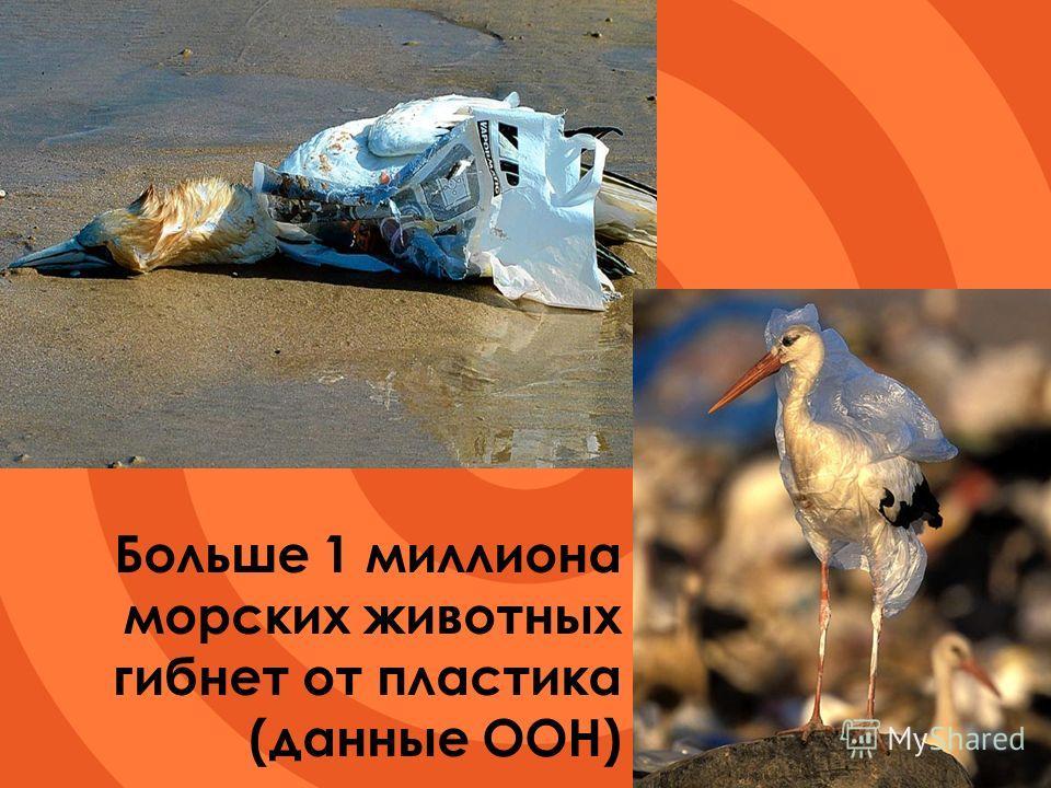 Больше 1 миллиона морских животных гибнет от пластика (данные ООН)