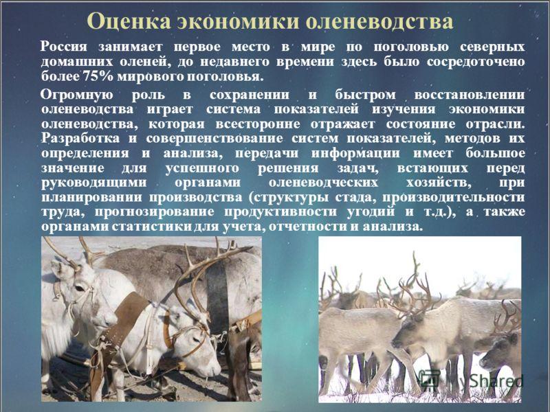 Оценка экономики оленеводства Россия занимает первое место в мире по поголовью северных домашних оленей, до недавнего времени здесь было сосредоточено более 75% мирового поголовья. Огромную роль в сохранении и быстром восстановлении оленеводства игра