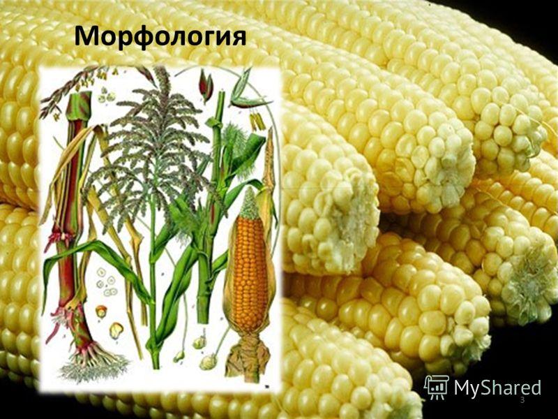 Морфология 3
