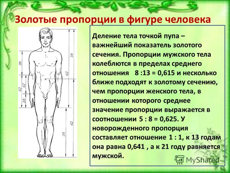 Золотые пропорции в фигуре человека Деление тела точкой пупа – важнейший показатель золотого сечения. Пропорции мужского тела колеблются в пределах среднего отношения 8 :13 = 0,615 и несколько ближе подходят к золотому сечению, чем пропорции женского