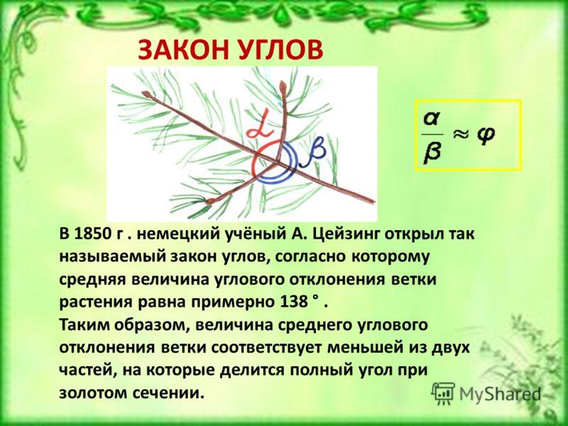 В 1850 г. немецкий учёный А. Цейзинг открыл так называемый закон углов, согласно которому средняя величина углового отклонения ветки растения равна примерно 138 °. Таким образом, величина среднего углового отклонения ветки соответствует меньшей из дв
