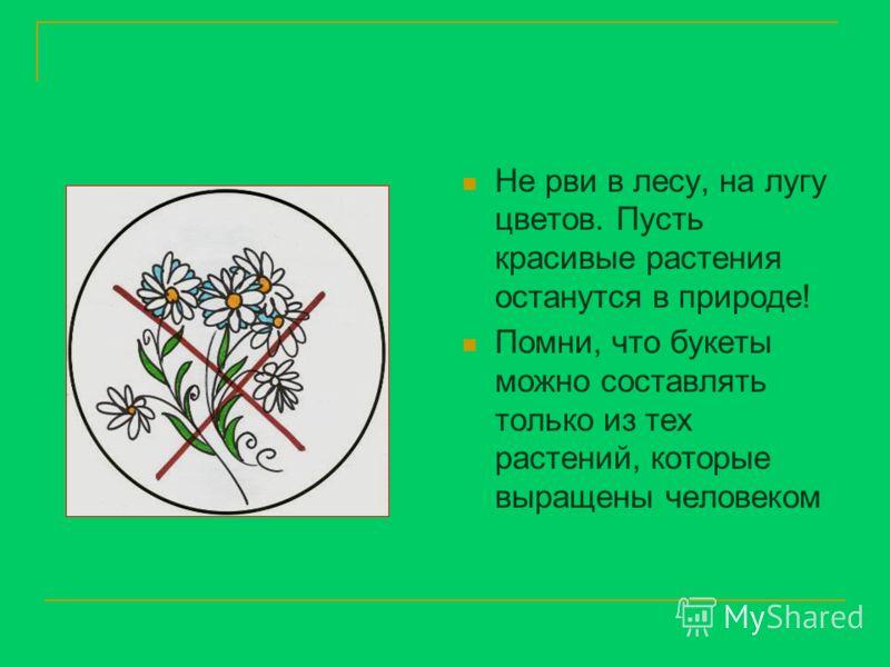 Не рви в лесу, на лугу цветов. Пусть красивые растения останутся в природе! Помни, что букеты можно составлять только из тех растений, которые выращены человеком