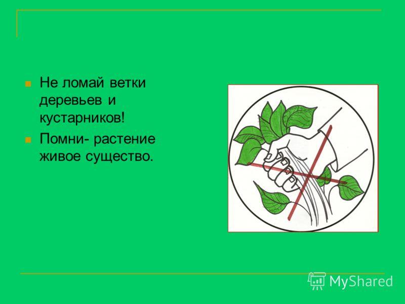 Не ломай ветки деревьев и кустарников! Помни- растение живое существо.