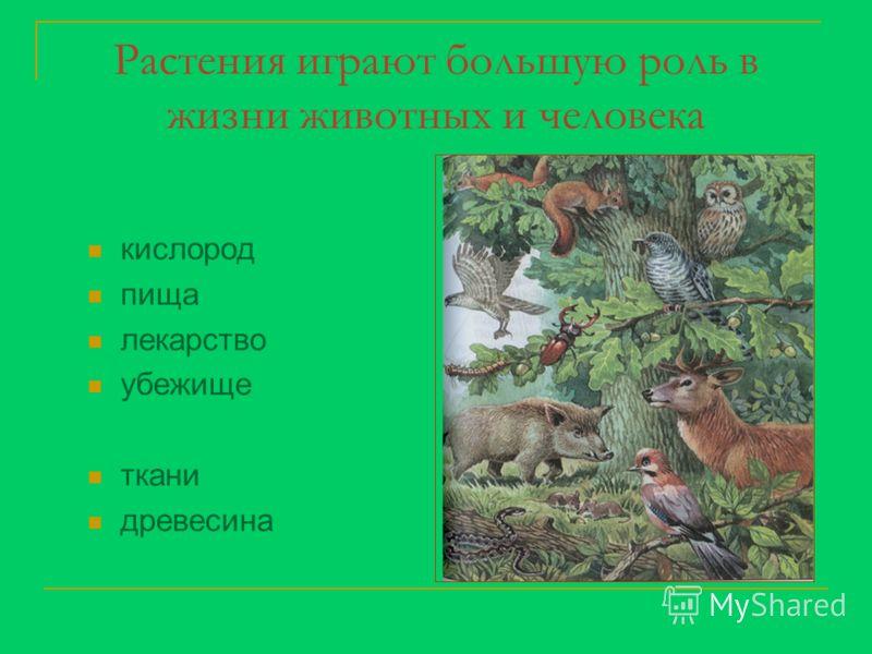 Растения играют большую роль в жизни животных и человека кислород пища лекарство убежище ткани древесина