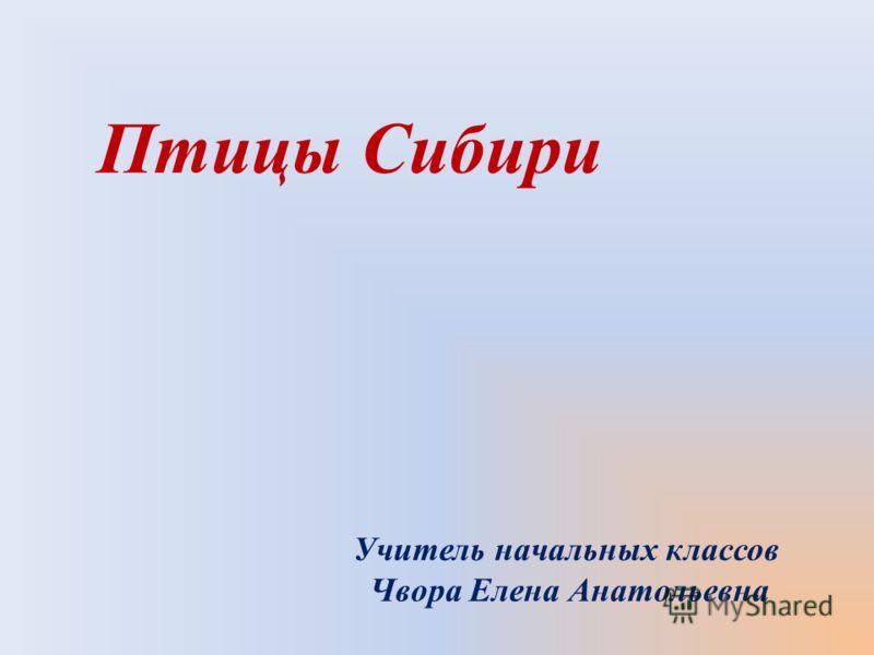 Птицы Сибири Учитель начальных классов Чвора Елена Анатольевна