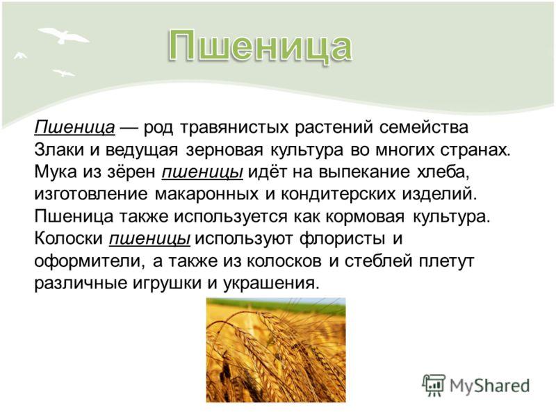 Пшеница род травянистых растений семейства Злаки и ведущая зерновая культура во многих странах. Мука из зёрен пшеницы идёт на выпекание хлеба, изготовление макаронных и кондитерских изделий. Пшеница также используется как кормовая культура. Колоски п