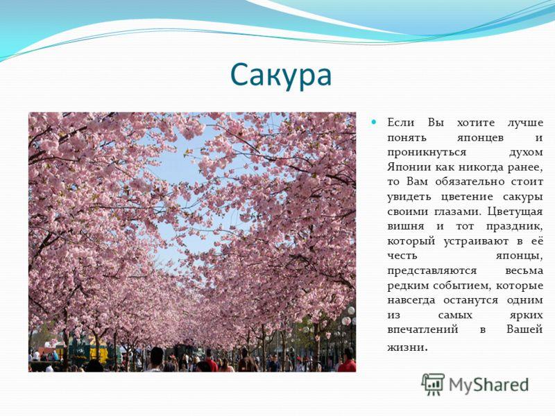Сакура Если Вы хотите лучше понять японцев и проникнуться духом Японии как никогда ранее, то Вам обязательно стоит увидеть цветение сакуры своими глазами. Цветущая вишня и тот праздник, который устраивают в её честь японцы, представляются весьма редк