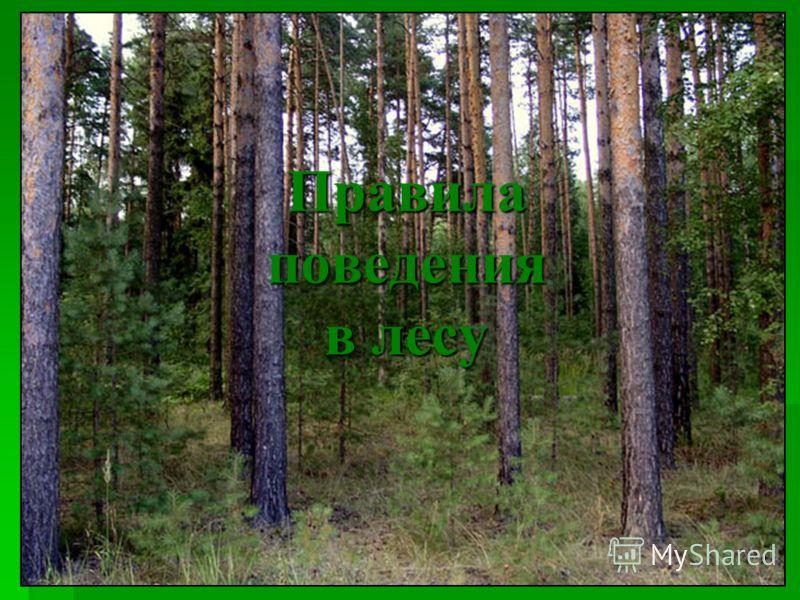Цель путешествия: сформировать знания о характерных признаках грибов как самостоятельного царства живой природы, об особенностях строения и жизнедеятельности шляпочных грибов, о съедобных и ядовитых грибах. сформировать знания о характерных признаках