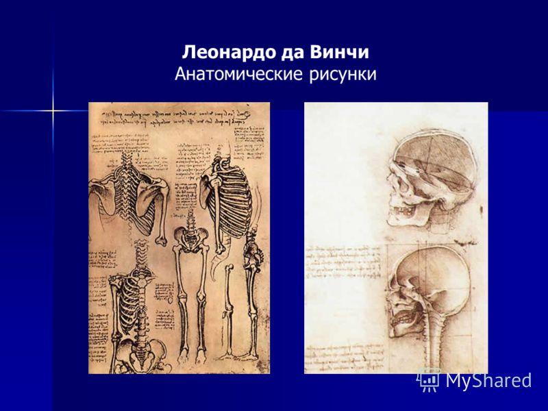 Леонардо да Винчи Анатомические рисунки