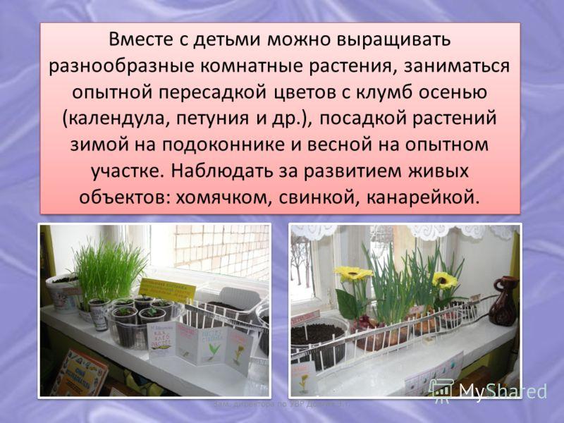 Вместе с детьми можно выращивать разнообразные комнатные растения, заниматься опытной пересадкой цветов с клумб осенью (календула, петуния и др.), посадкой растений зимой на подоконнике и весной на опытном участке. Наблюдать за развитием живых объект