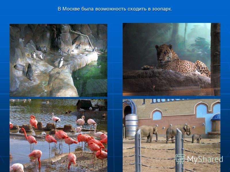 В Москве была возможность сходить в зоопарк.