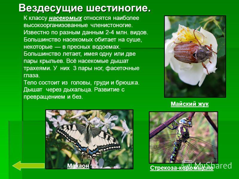 Вездесущие шестиногие. Майский жук Стрекоза-коромысло Махаон К классу насекомых относятся наиболее высокоорганизованные членистоногие. Известно по разным данным 2-4 млн. видов. Большинство насекомых обитает на суше, некоторые в пресных водоемах. Боль