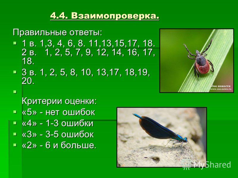 4.4. Взаимопроверка. Правильные ответы: 1 в. 1,3, 4, 6, 8. 11,13,15,17, 18. 2 в. 1, 2, 5, 7, 9, 12, 14, 16, 17, 18. 1 в. 1,3, 4, 6, 8. 11,13,15,17, 18. 2 в. 1, 2, 5, 7, 9, 12, 14, 16, 17, 18. 3 в. 1, 2, 5, 8, 10, 13,17, 18,19, 20. 3 в. 1, 2, 5, 8, 10