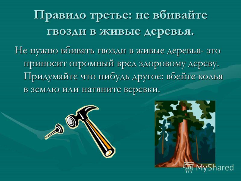 Правило третье: не вбивайте гвозди в живые деревья. Не нужно вбивать гвозди в живые деревья- это приносит огромный вред здоровому дереву. Придумайте что нибудь другое: вбейте колья в землю или натяните веревки.