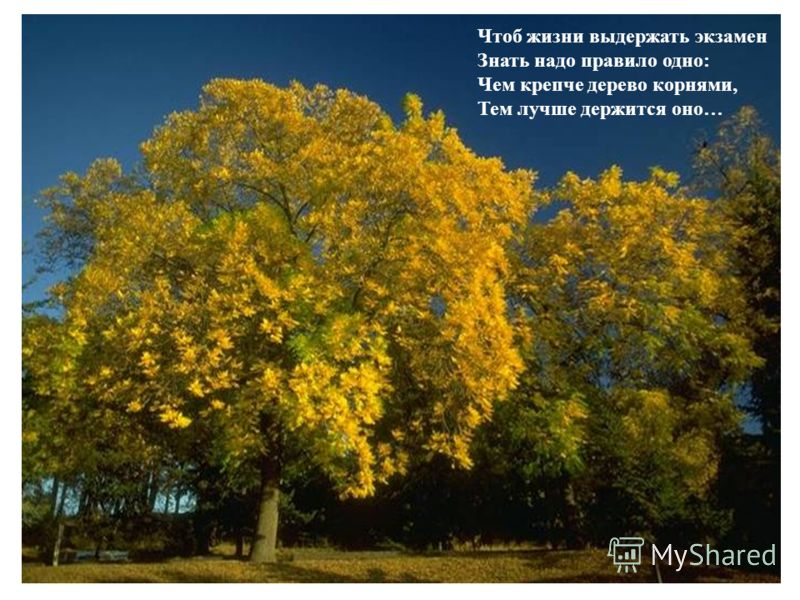 Чтоб жизни выдержать экзамен Знать надо правило одно: Чем крепче дерево корнями, Тем лучше держится оно…
