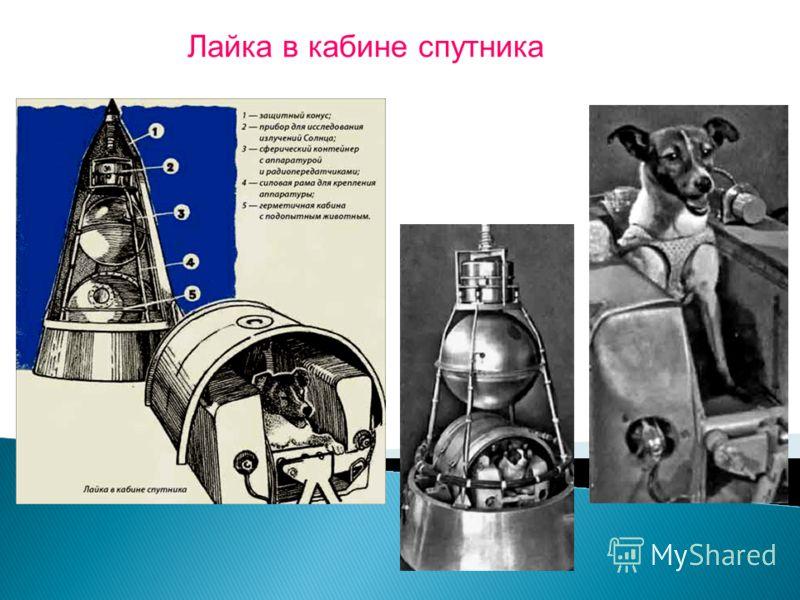 Лайка перед полетом. Уже после полета собаки Лайки на Втором искусственном спутнике Земли мы убедились, что еще многого не знаем, в том числе не умеем возвращать искусственный спутник Земли. 3 ноября 1957 года