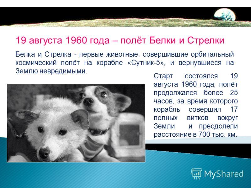 8 июля 1960 года на 19-й секунде полета у ракеты с кораблем Восток отвалился боковой блок, она упала и взорвалась В катастрофе погибли собаки Чайка и Лисичка
