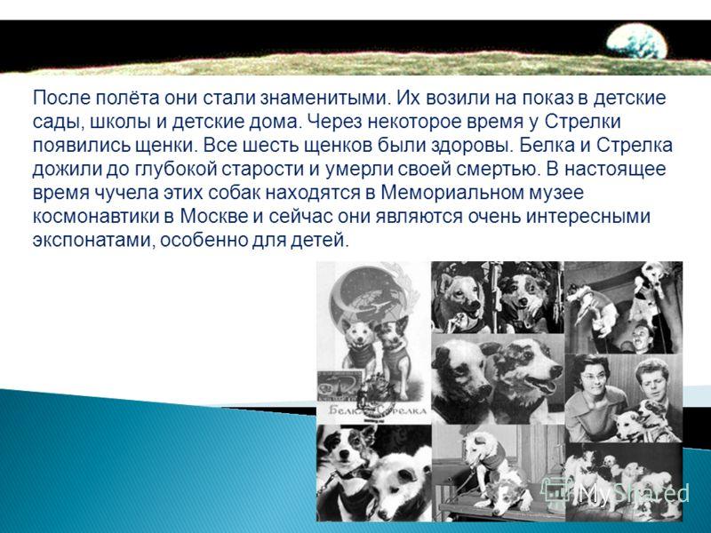 Спустя сутки Белка и Стрелка принимали участие в пресс- конференции. Животных журналистам представил академик Олег Глазенко.