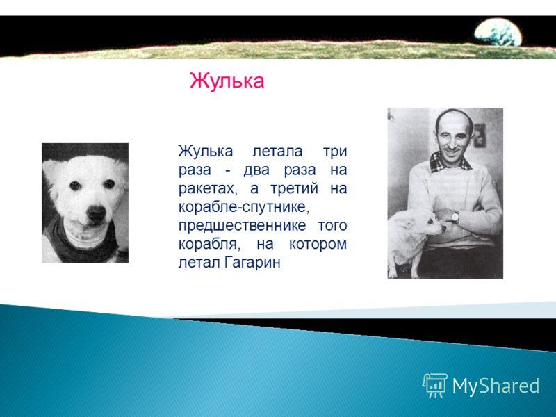 Белка Стрелка Чучела собак находятся в Мемориальном музее космонавтики