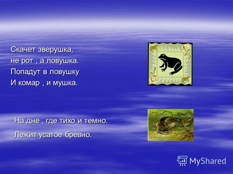 Скачет зверушка, не рот, а ловушка. Попадут в ловушку И комар, и мушка. На дне, где тихо и темно. Лежит усатое бревно.