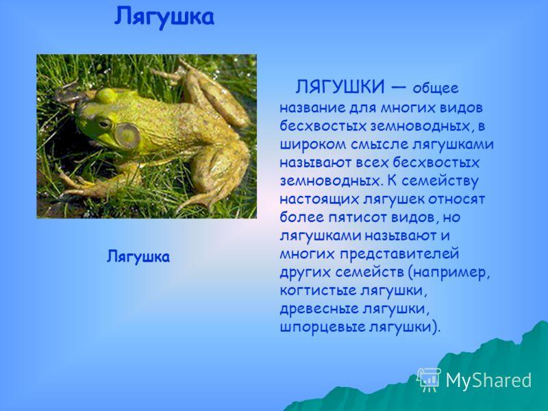 ЛЯГУШКИ общее название для многих видов бесхвостых земноводных, в широком смысле лягушками называют всех бесхвостых земноводных. К семейству настоящих лягушек относят более пятисот видов, но лягушками называют и многих представителей других семейств