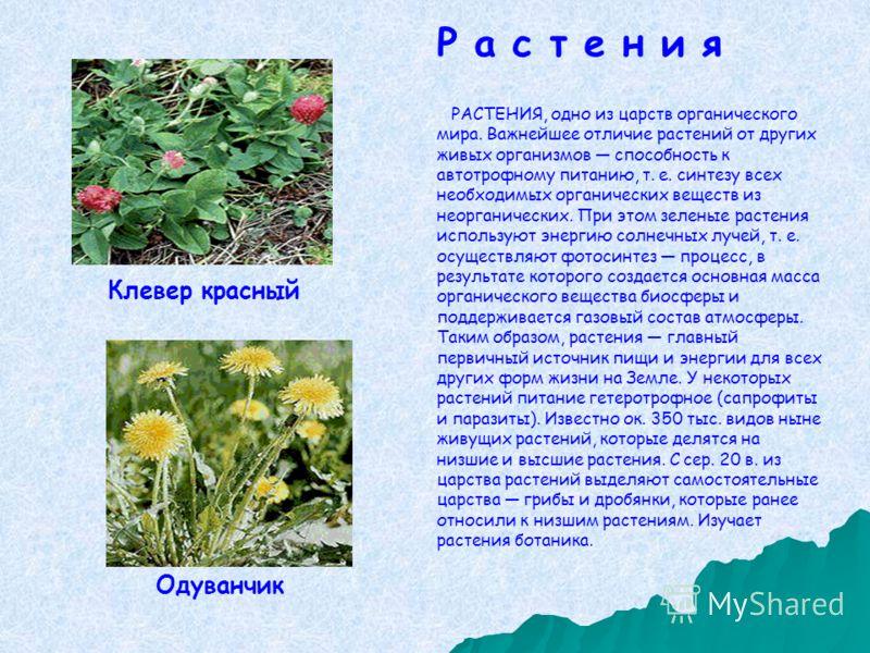 РАСТЕНИЯ, одно из царств органического мира. Важнейшее отличие растений от других живых организмов способность к автотрофному питанию, т. е. синтезу всех необходимых органических веществ из неорганических. При этом зеленые растения используют энергию