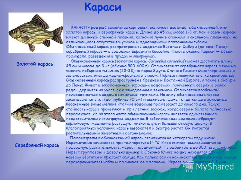 КАРАСИ - род рыб семейства карповых; включает два вида: обыкновенный, или золотой карась, и серебряный карась. Длина до 45 см, масса 1-3 кг. Как и сазан, караси имеют длинный спинной плавник, колючие лучи в спинном и анальном плавниках, но отличающие