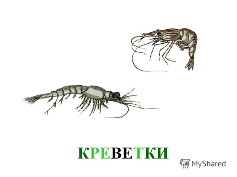 На дне моря, среди камней и на песке живут крабы. Они бывают разных видов. У крабов сильные клешни, которыми они удерживают добычу и защищаются от врагов. Если ты поймаешь краба, будь осторожен. краб может больно ущипнуть своими клешнями. Давай лучше
