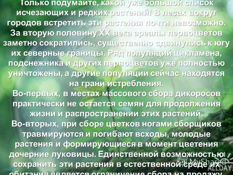 Только подумайте, какой уже большой список исчезающих и редких растений! В лесах вокруг городов встретить эти растения почти невозможно. За вторую половину XX века ареалы первоцветов заметно сократились, существенно сдвинулись к югу их северные грани