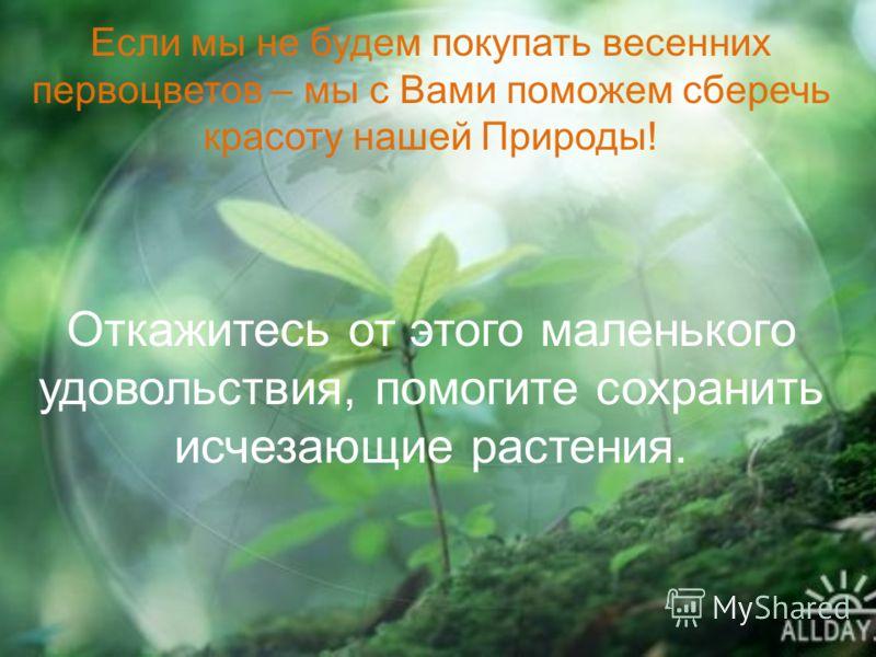 Если мы не будем покупать весенних первоцветов – мы с Вами поможем сберечь красоту нашей Природы! Откажитесь от этого маленького удовольствия, помогите сохранить исчезающие растения.