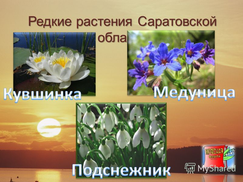 Редкие растения Саратовской области