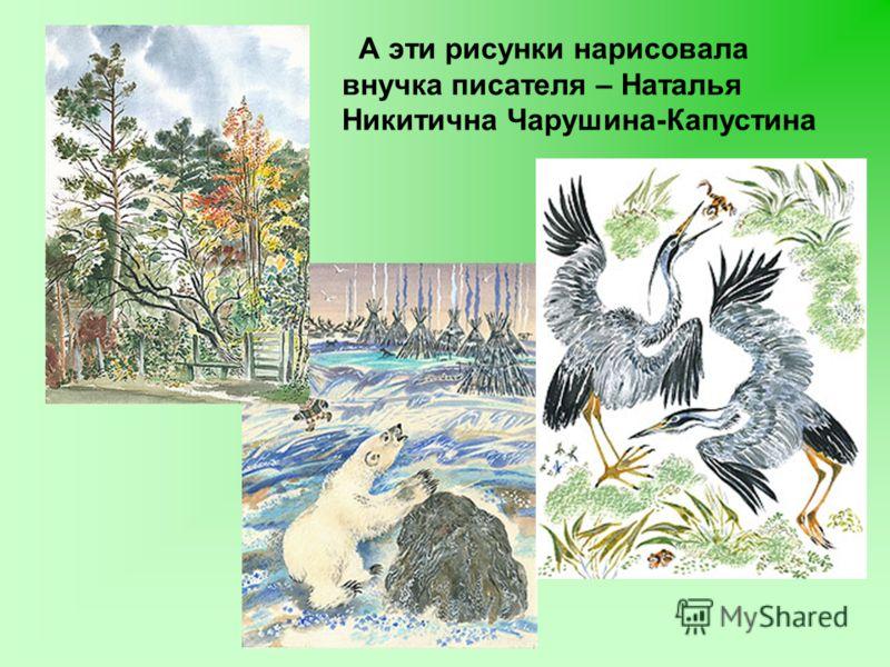 А эти рисунки нарисовала внучка писателя – Наталья Никитична Чарушина-Капустина