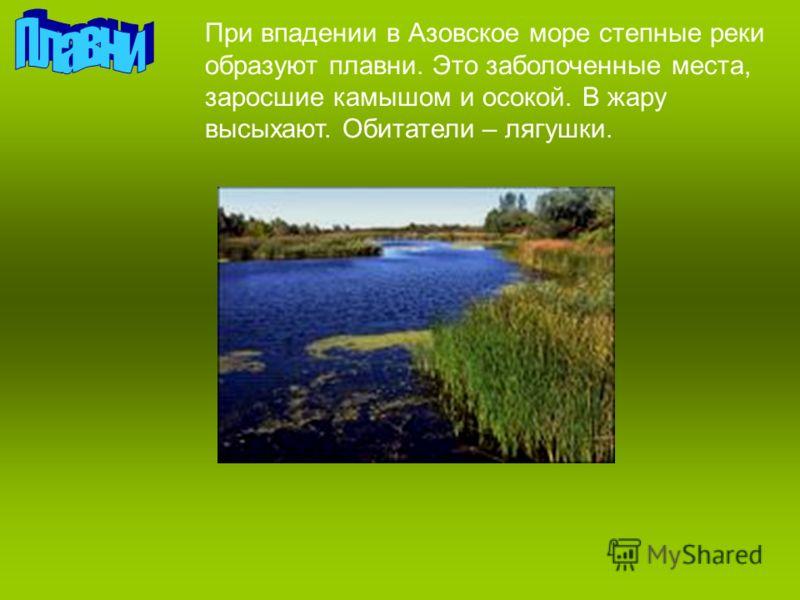 При впадении в Азовское море степные реки образуют плавни. Это заболоченные места, заросшие камышом и осокой. В жару высыхают. Обитатели – лягушки.