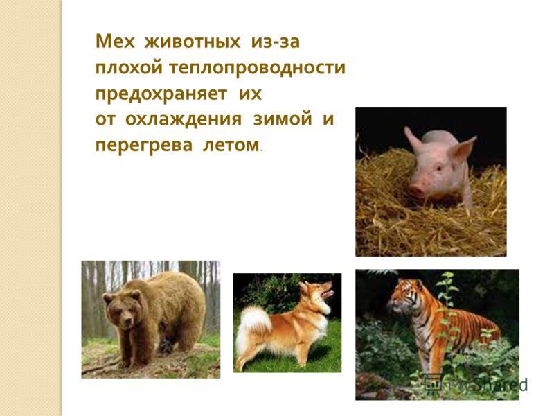 Мех животных из - за плохой теплопроводности предохраняет их от охлаждения зимой и перегрева летом.