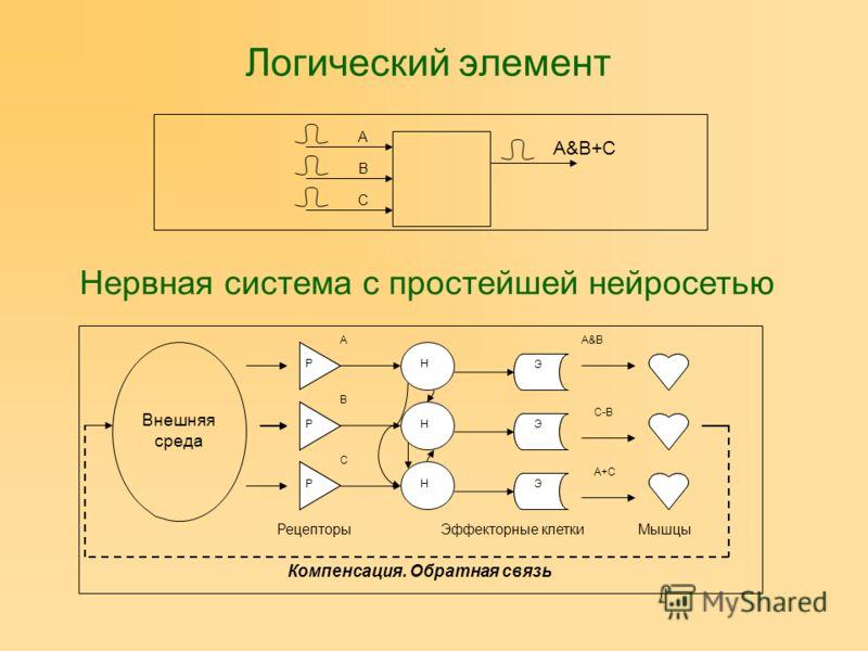 Логический элемент A B C A&B+C Нервная система с простейшей нейросетью Внешняя среда РР Р Э Э Э РецепторыЭффекторные клеткиМышцы Компенсация. Обратная связь Р Р Р Э Э Э Н Н Н A B C C-B A&B A+C