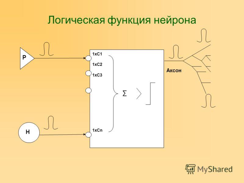Логическая функция нейрона Аксон Р Н 1хС1 1хС2 1хС3 1хСn