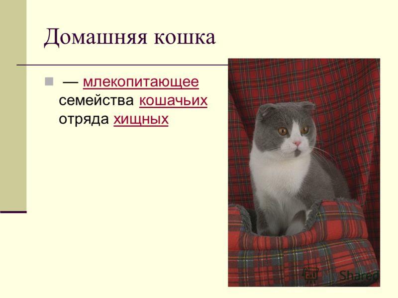 Домашняя кошка млекопитающее семейства кошачьих отряда хищныхмлекопитающеекошачьиххищных