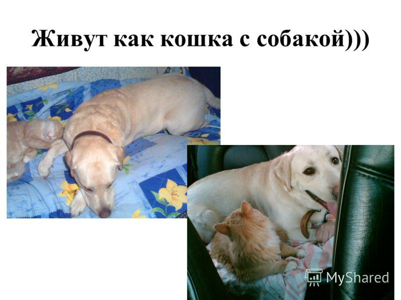 Живут как кошка с собакой)))
