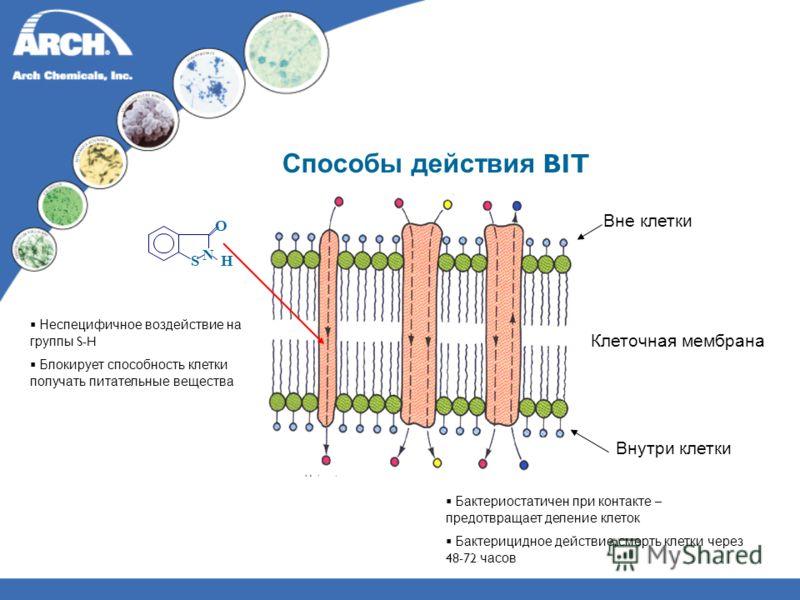 Способы действия BIT Вне клетки Клеточная мембрана Внутри клетки Бактериостатичен при контакте – предотвращает деление клеток Бактерицидное действие, смерть клетки через 48-72 часов Неспецифичное воздействие на группы S-H Блокирует способность клетки