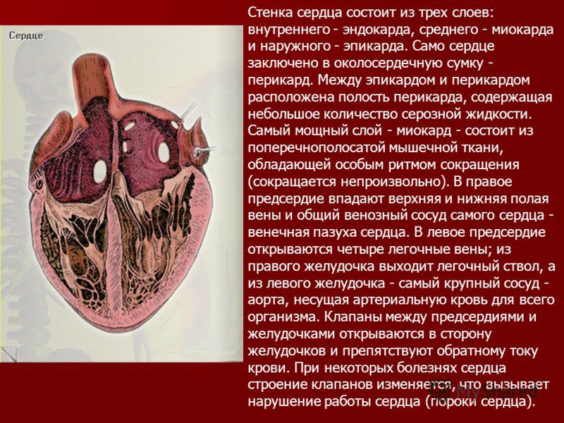 Стенка сердца состоит из трех слоев: внутреннего - эндокарда, среднего - миокарда и наружного - эпикарда. Само сердце заключено в околосердечную сумку - перикард. Между эпикардом и перикардом расположена полость перикарда, содержащая небольшое количе