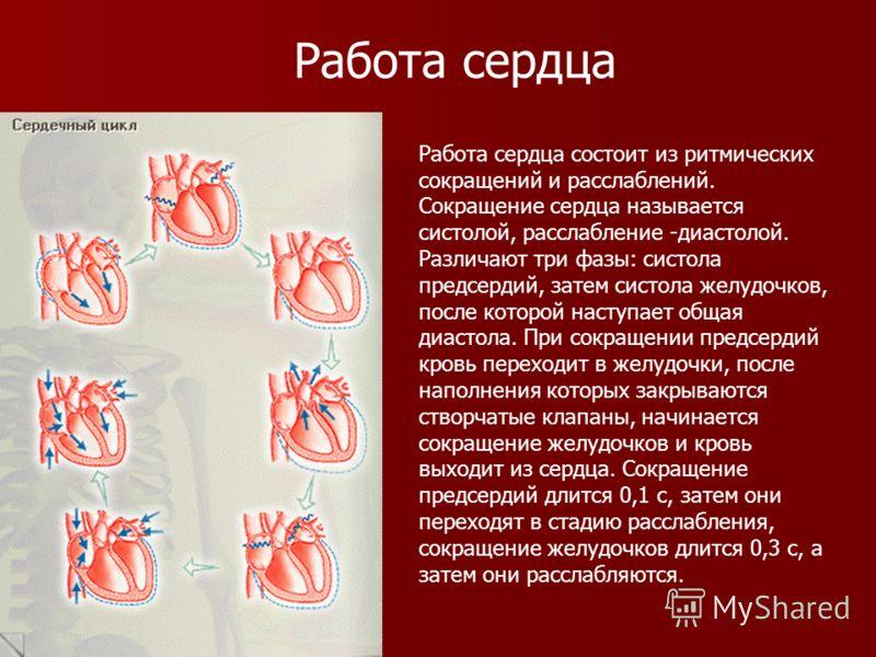 Работа сердца состоит из ритмических сокращений и расслаблений. Сокращение сердца называется систолой, расслабление -диастолой. Различают три фазы: систола предсердий, затем систола желудочков, после которой наступает общая диастола. При сокращении п